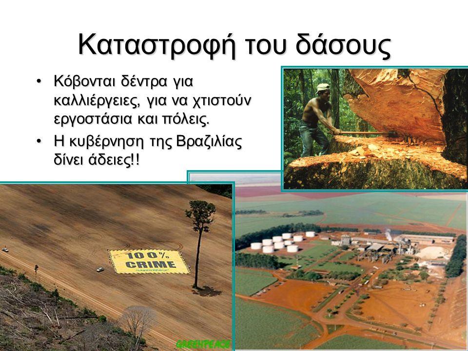 Καταστροφή του δάσους Κόβονται δέντρα για καλλιέργειες, για να χτιστούν εργοστάσια και πόλεις. Η κυβέρνηση της Βραζιλίας δίνει άδειες!!