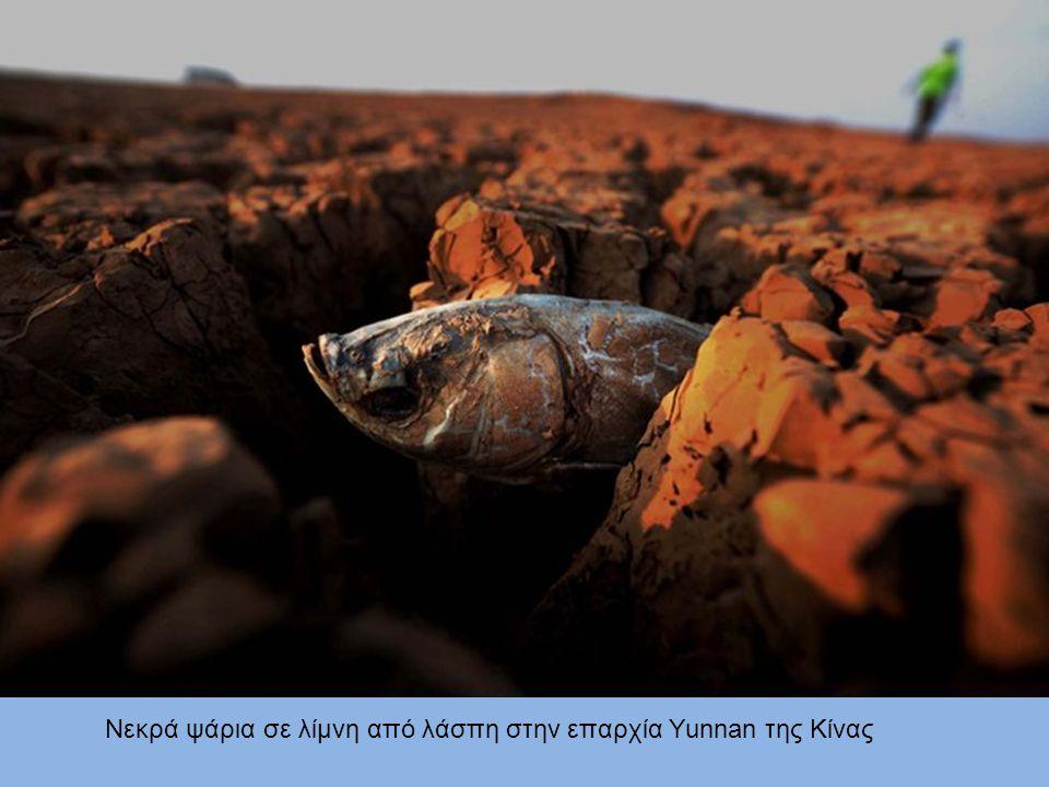 Νεκρά ψάρια σε λίμνη από λάσπη στην επαρχία Yunnan της Κίνας