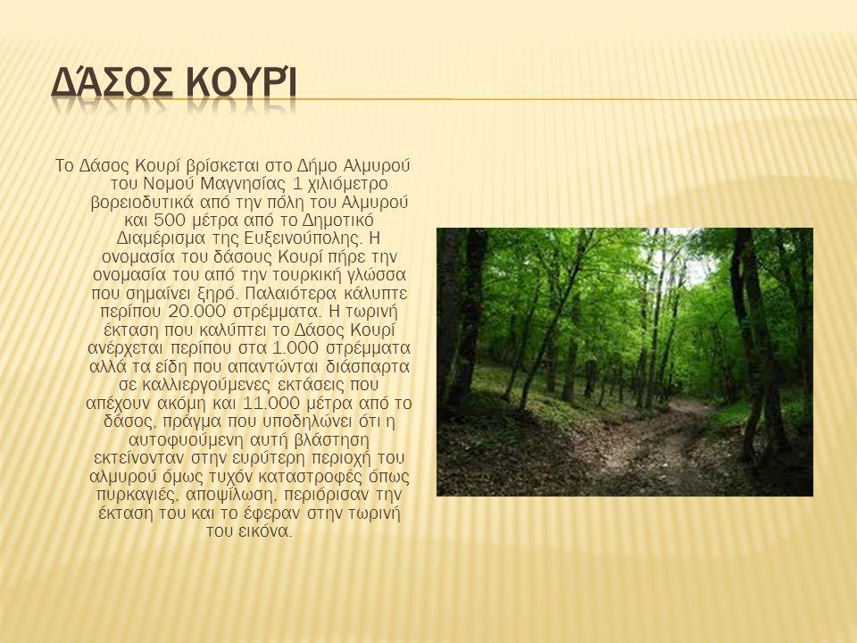 Δάσος Κουρί