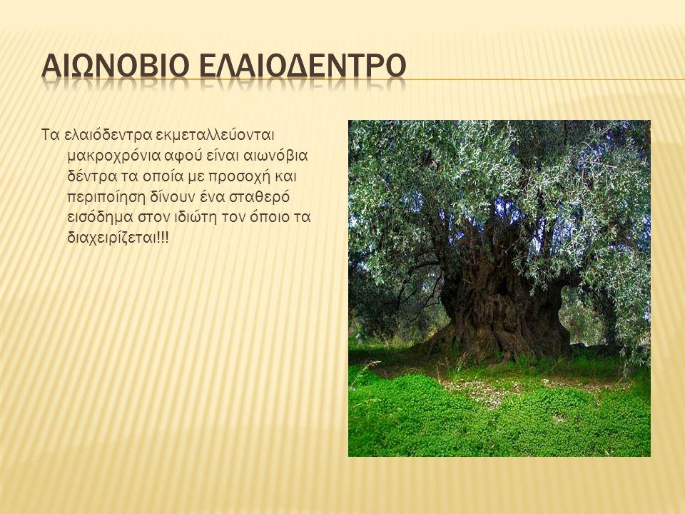Αιωνοβιο ελαιοδεντρο