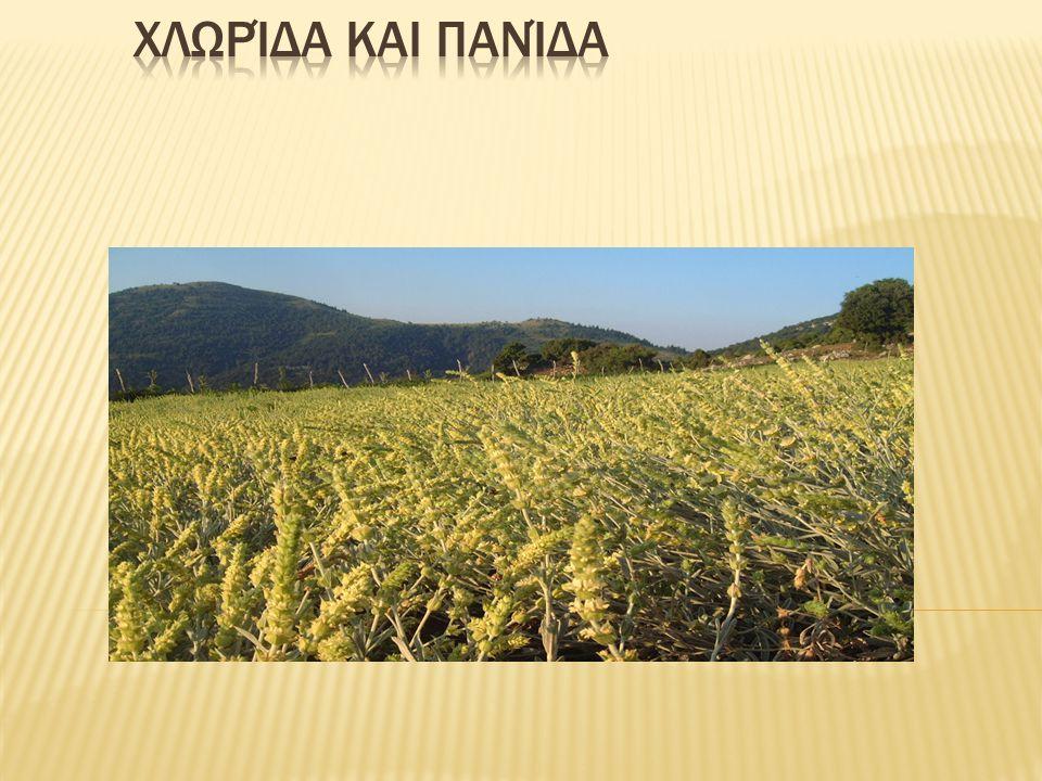 Τα αρωματικά φυτά της περιοχής μας