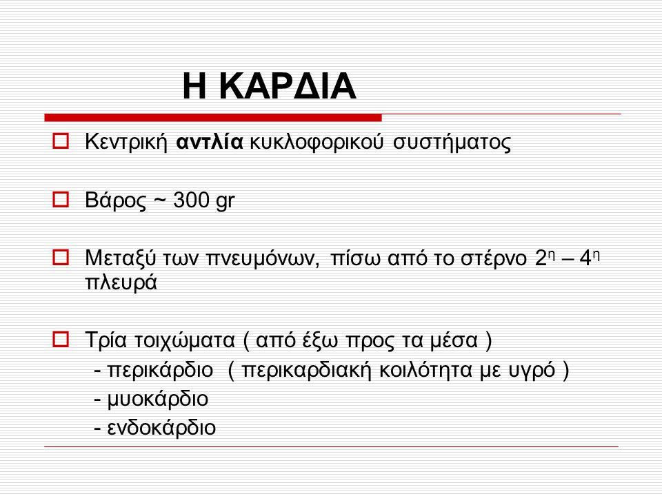 Η ΚΑΡΔΙΑ Κεντρική αντλία κυκλοφορικού συστήματος Βάρος ~ 300 gr
