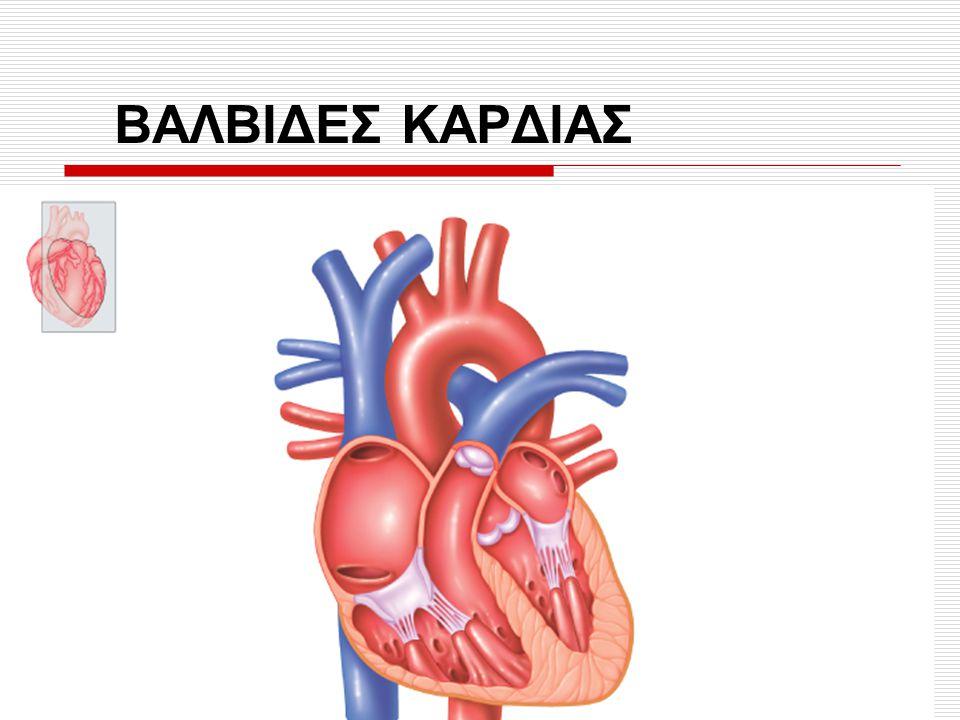ΒΑΛΒΙΔΕΣ ΚΑΡΔΙΑΣ Fig. 14.1 Germann