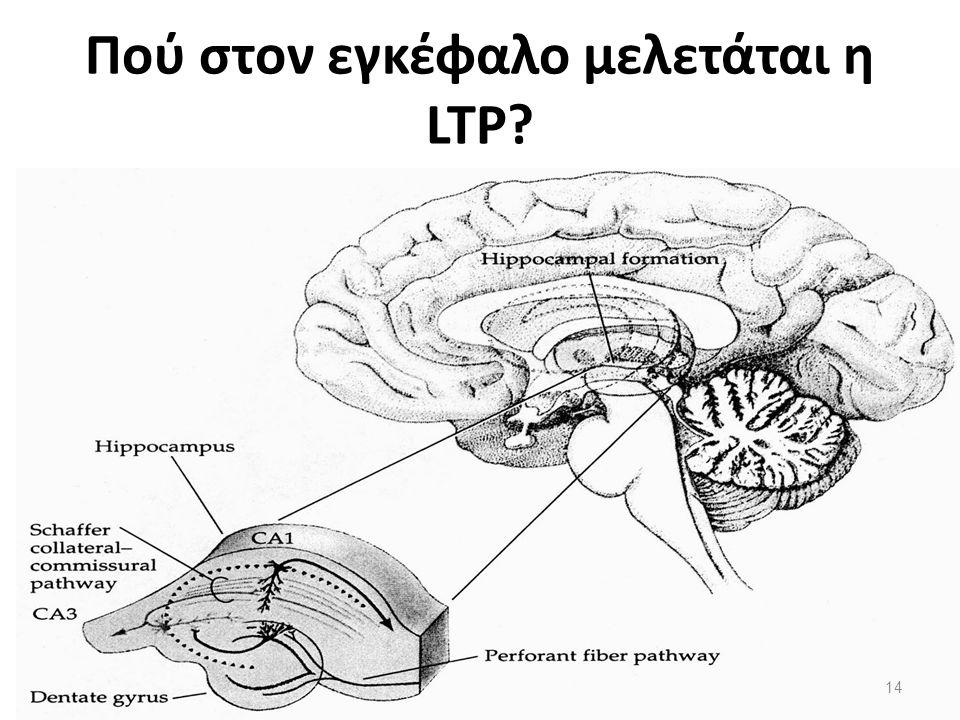 Πού στον εγκέφαλο μελετάται η LTP