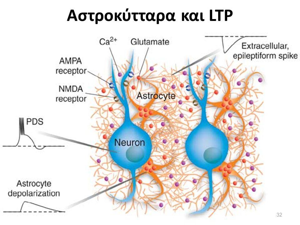Αστροκύτταρα και LTP