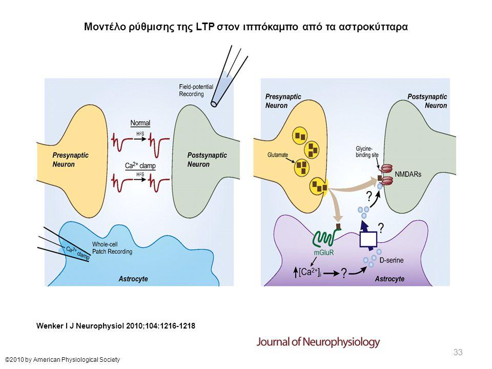 Μοντέλο ρύθμισης της LTP στον ιππόκαμπο από τα αστροκύτταρα