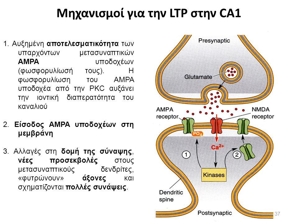 Μηχανισμοί για την LTP στην CA1