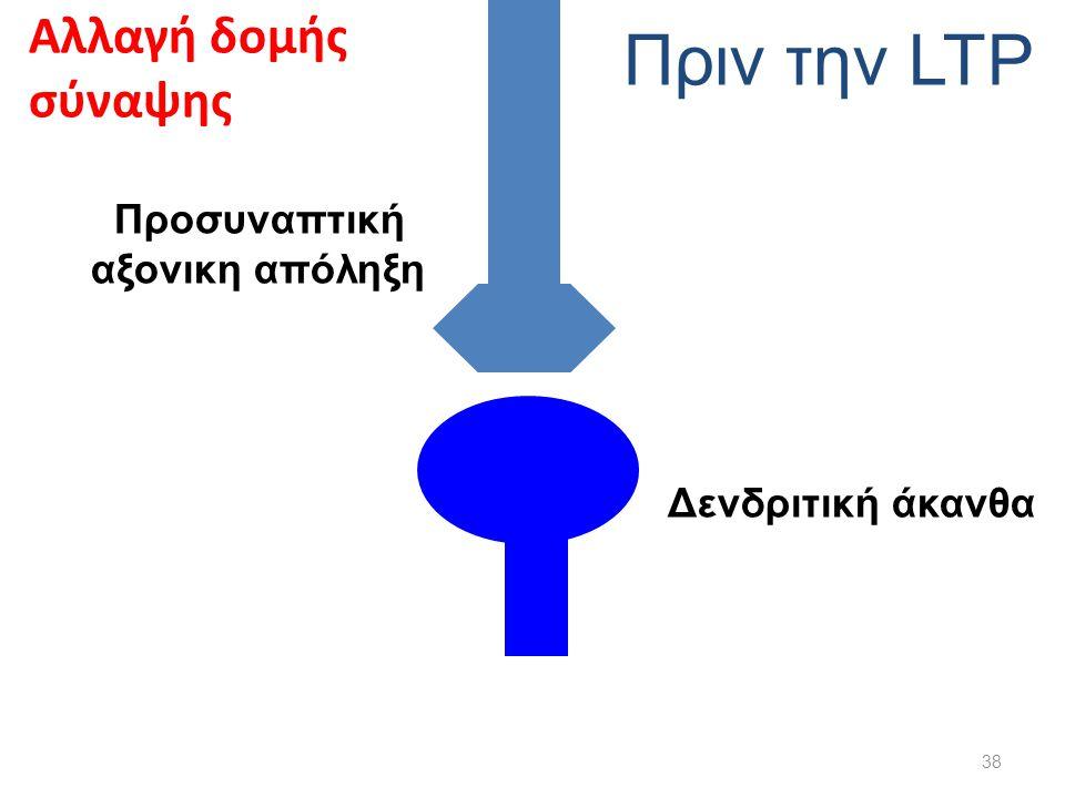 Πριν την LTP Αλλαγή δομής σύναψης Προσυναπτική αξονικη απόληξη