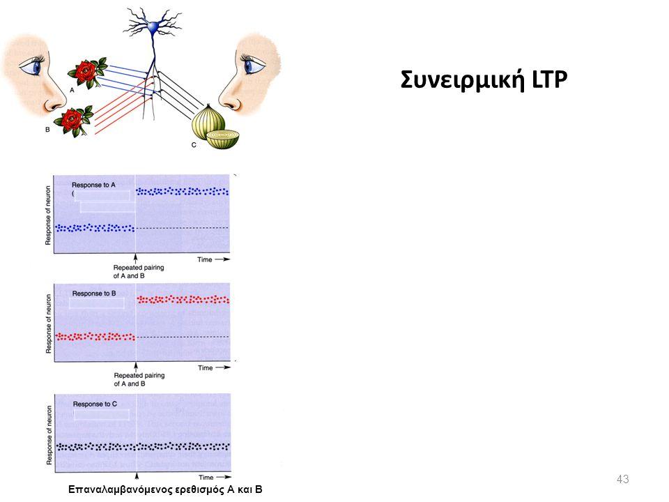 Source B A C Συνειρμική LTP Επαναλαμβανόμενος ερεθισμός Α και Β