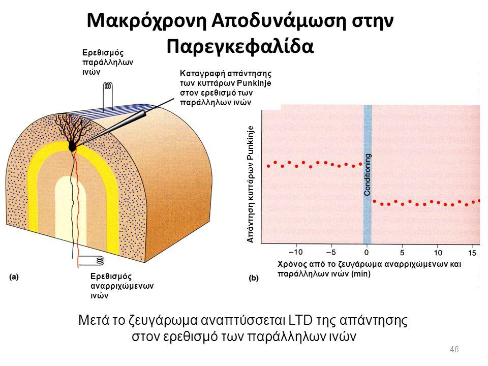 Μακρόχρονη Αποδυνάμωση στην Παρεγκεφαλίδα