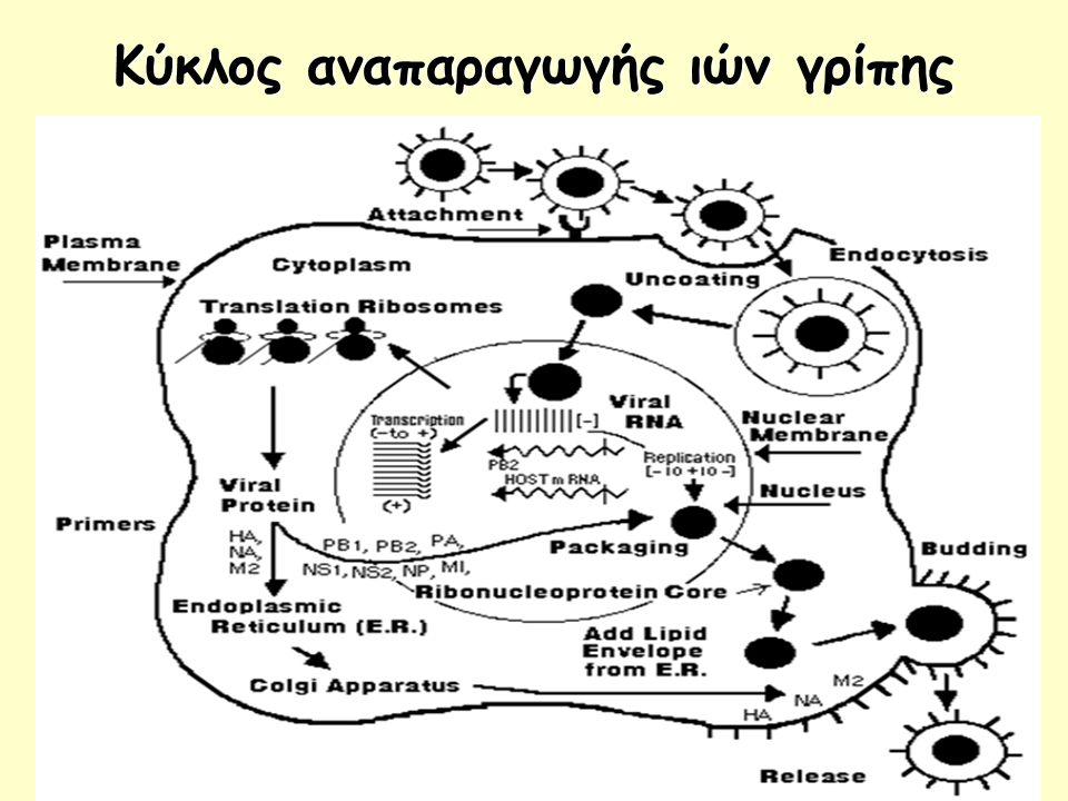 Κύκλος αναπαραγωγής ιών γρίπης
