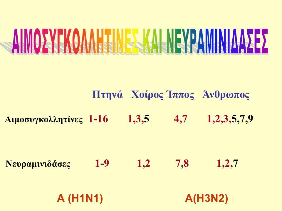 ΑΙΜΟΣΥΓΚΟΛΛΗΤΙΝΕΣ ΚΑΙ ΝΕΥΡΑΜΙΝΙΔΑΣΕΣ