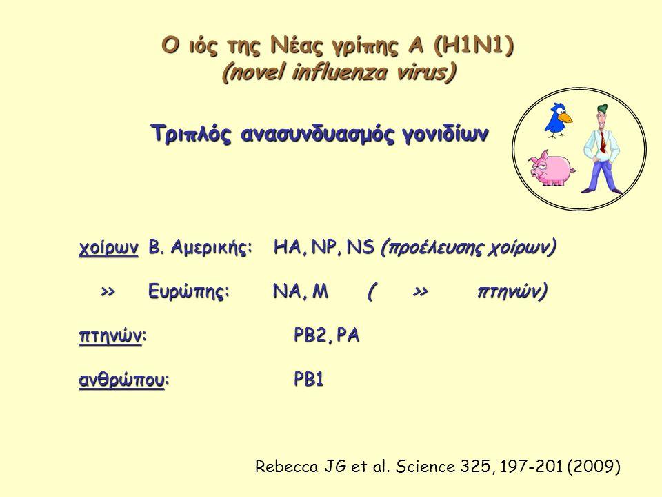 Ο ιός της Νέας γρίπης Α (Η1Ν1) (novel influenza virus)