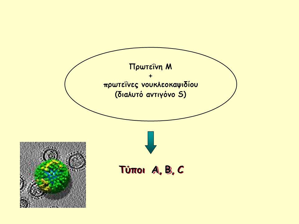 πρωτεΐνες νουκλεοκαψιδίου