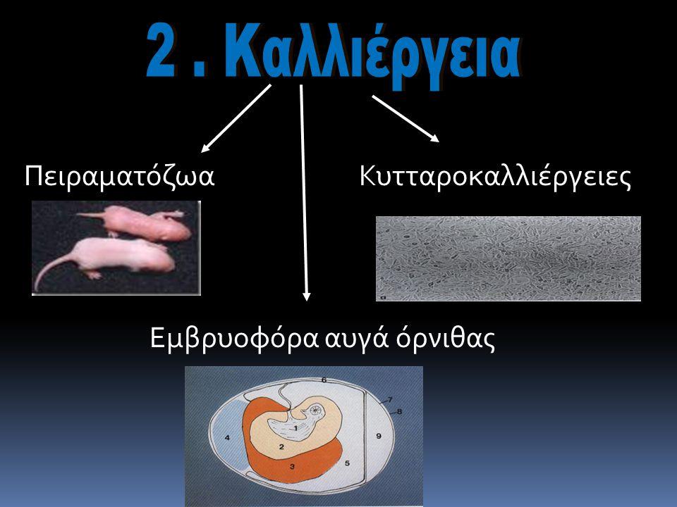 2 . Καλλιέργεια Πειραματόζωα Κυτταροκαλλιέργειες