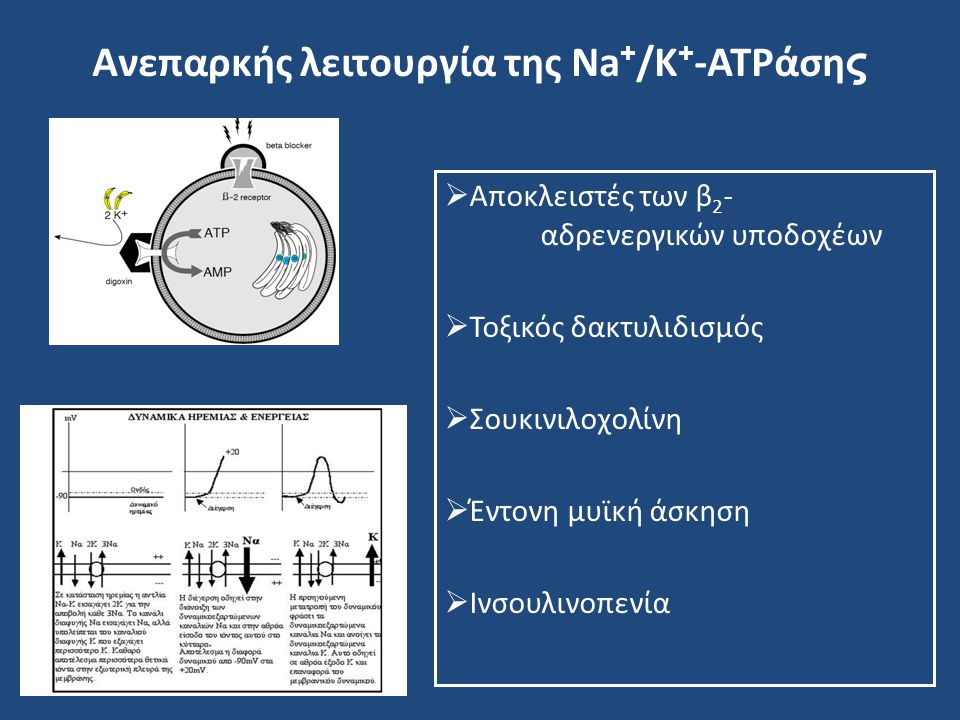 Ανεπαρκής λειτουργία της Na+/K+-ATPάσης