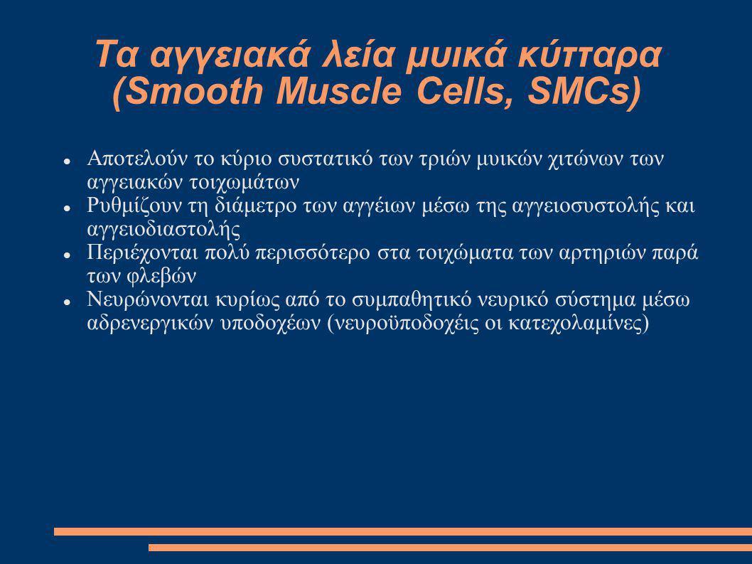 Τα αγγειακά λεία μυικά κύτταρα (Smooth Muscle Cells, SMCs)