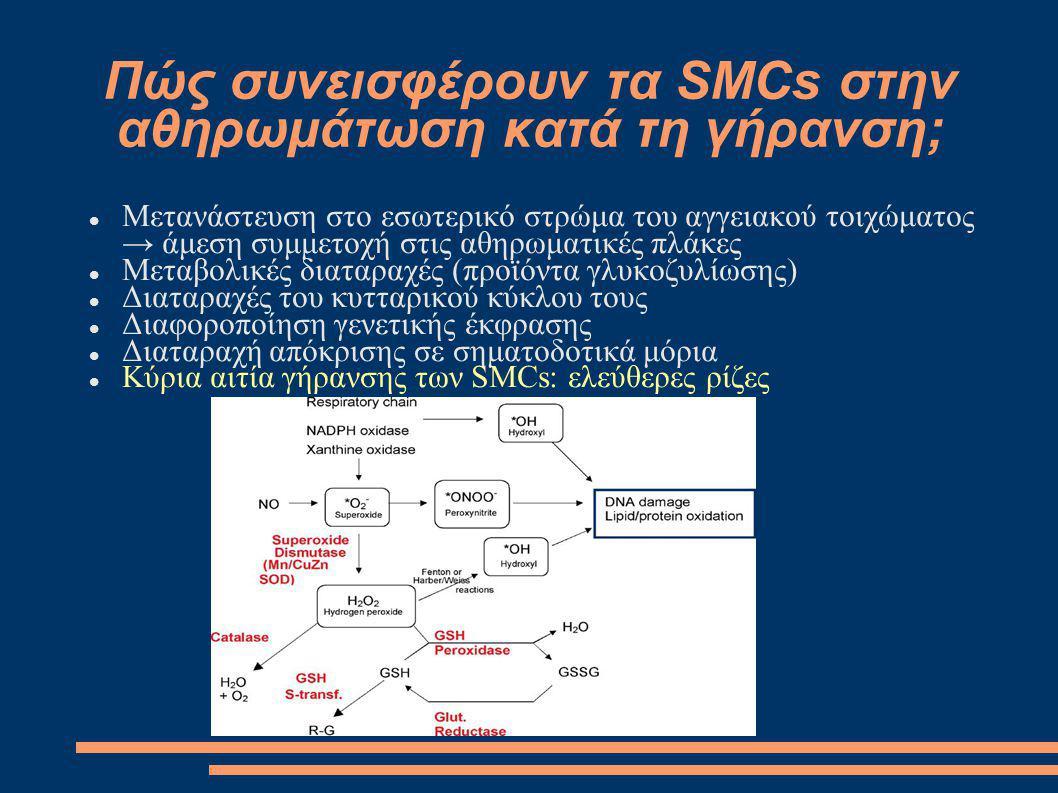 Πώς συνεισφέρουν τα SMCs στην αθηρωμάτωση κατά τη γήρανση;