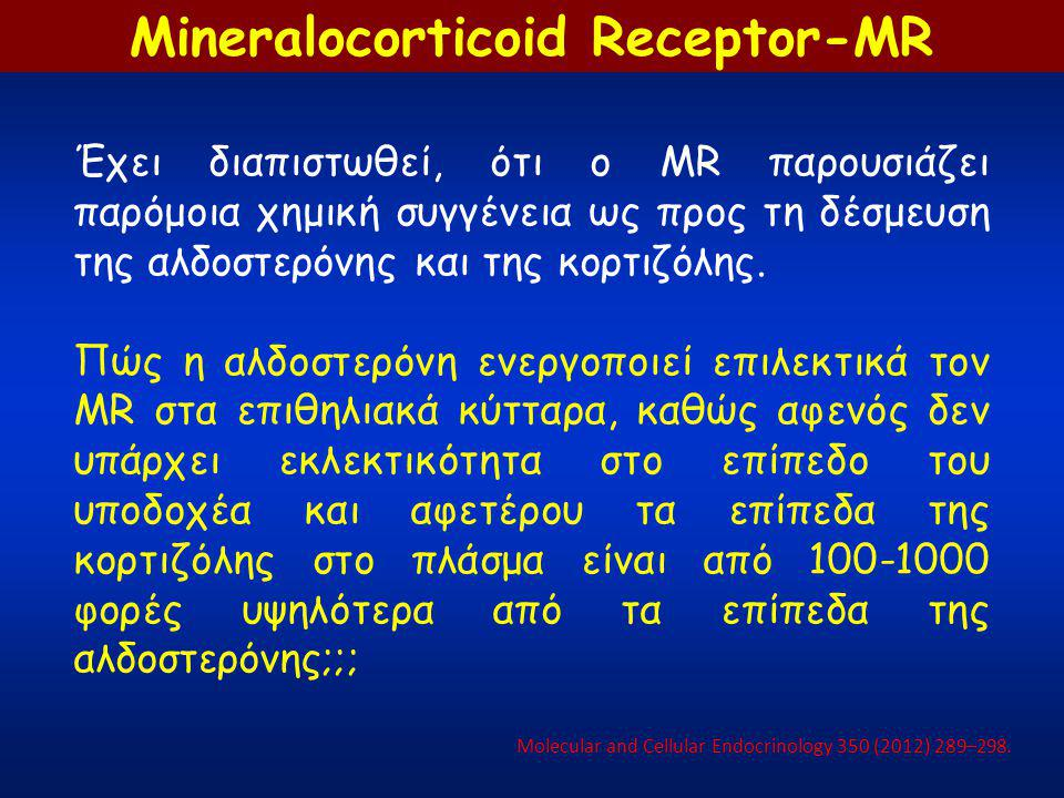 Mineralocorticoid Receptor-MR