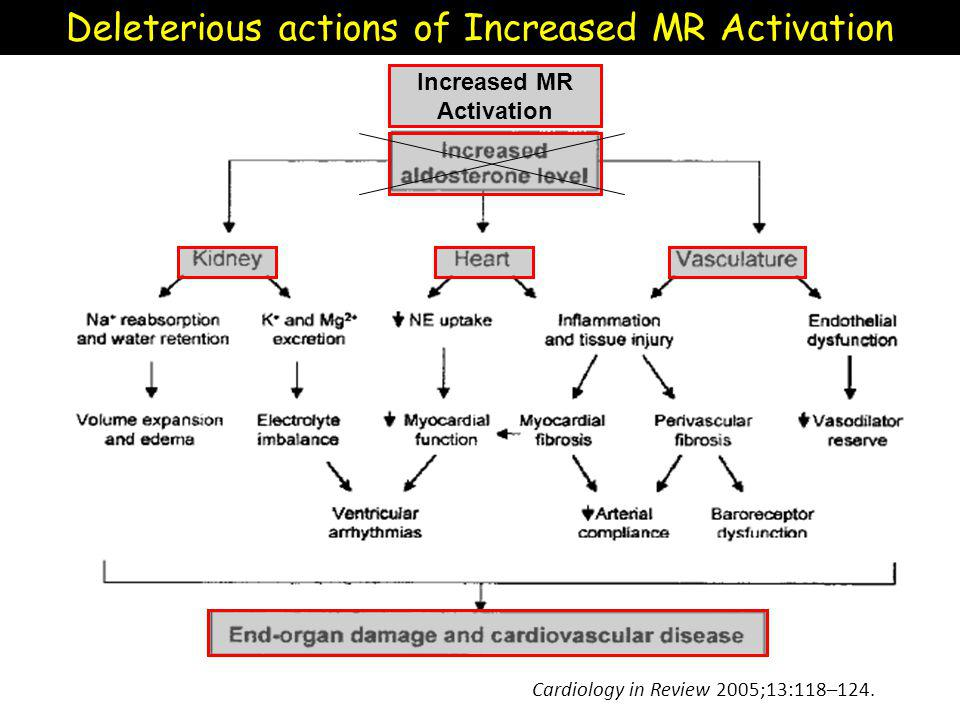 Increased MR Activation