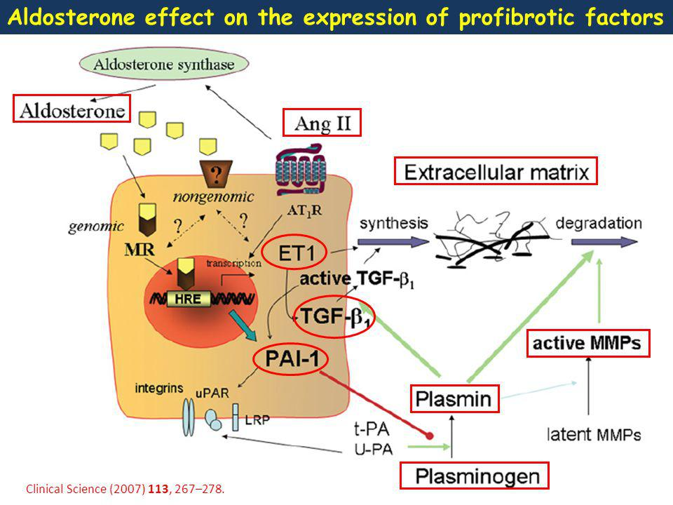 Aldosterone effect on the expression of profibrotic factors