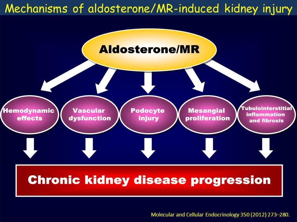 Mechanisms of aldosterone/MR-induced kidney injury