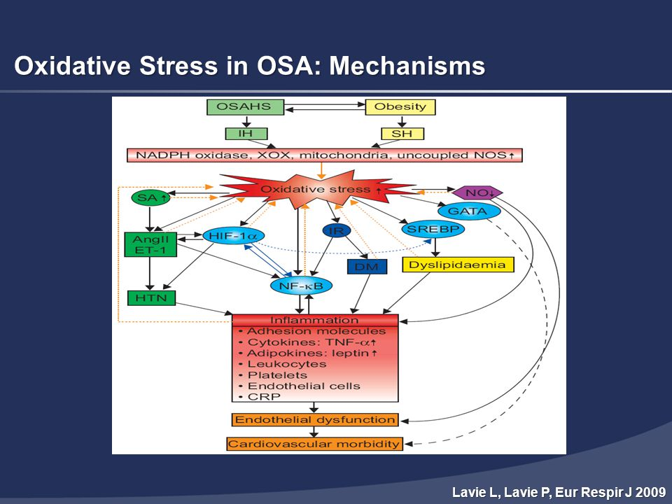 Oxidative Stress in OSA: Mechanisms