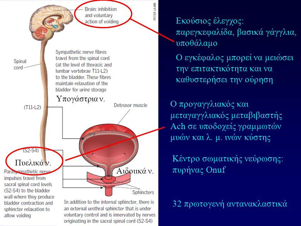 Εκούσιος έλεγχος: παρεγκεφαλίδα, βασικά γάγγλια, υποθάλαμο