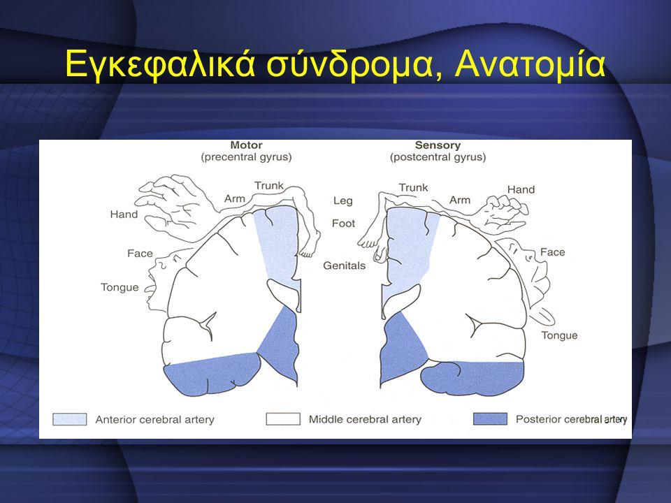 Εγκεφαλικά σύνδρομα, Ανατομία