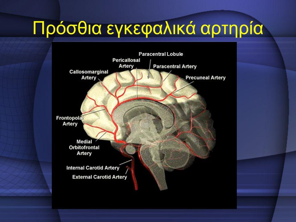 Πρόσθια εγκεφαλικά αρτηρία
