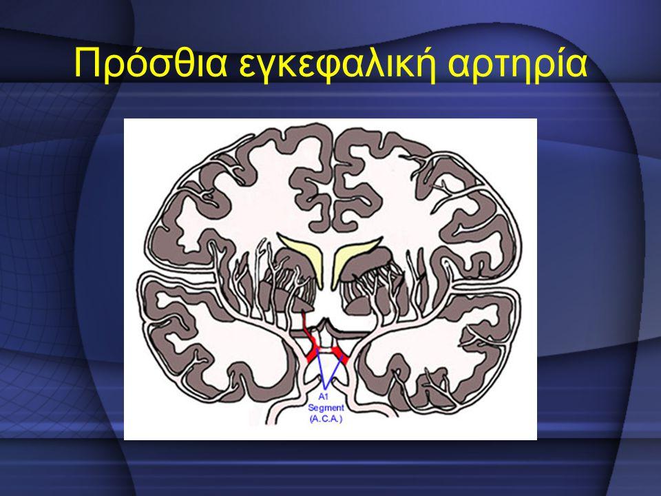 Πρόσθια εγκεφαλική αρτηρία