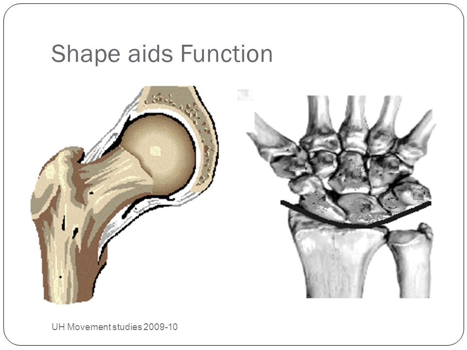 Shape aids Function UH Movement studies 2009-10