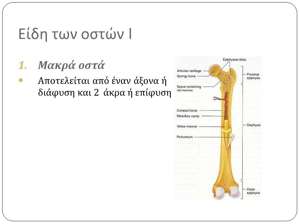 Είδη των οστών I Μακρά οστά