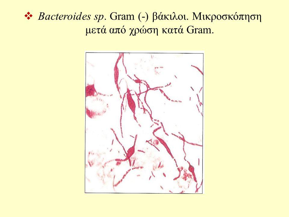Bacteroides sp. Gram (-) βάκιλοι. Μικροσκόπηση μετά από χρώση κατά Gram.