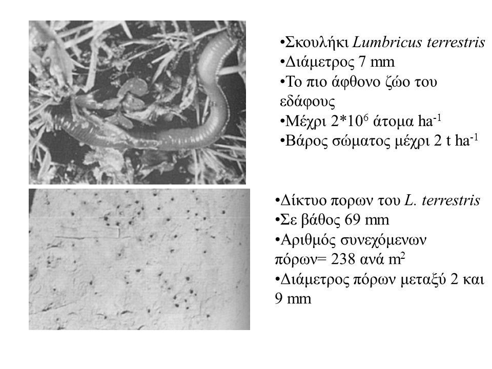 Σκουλήκι Lumbricus terrestris