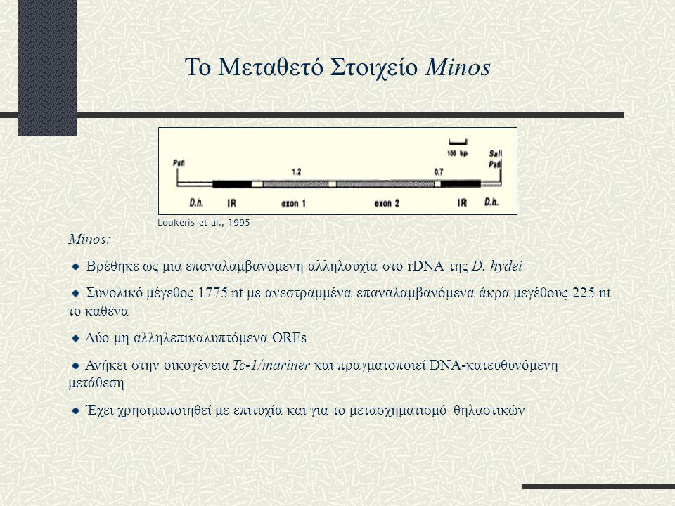 Το Μεταθετό Στοιχείο Minos