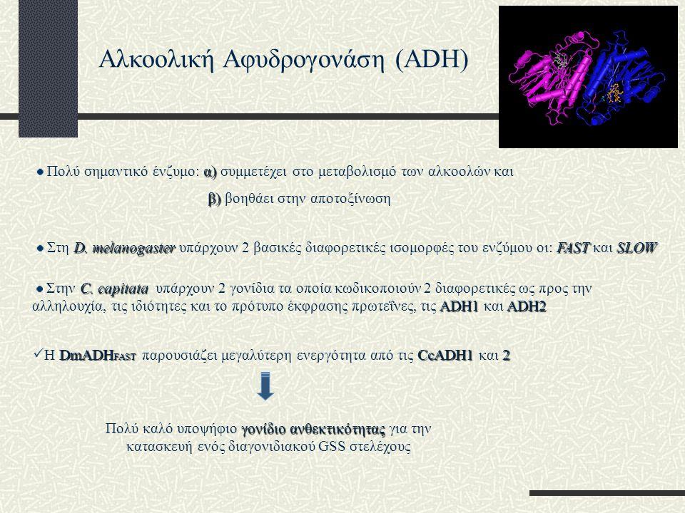 Αλκοολική Αφυδρογονάση (ADH)