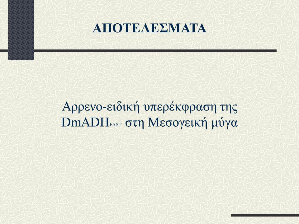 Αρρενο-ειδική υπερέκφραση της DmADHFAST στη Μεσογεική μύγα