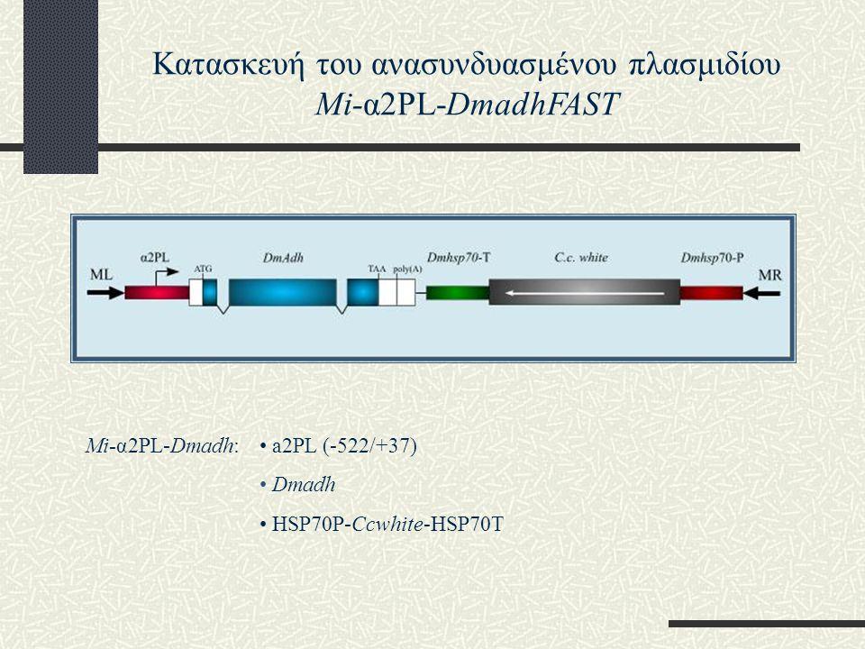 Κατασκευή του ανασυνδυασμένου πλασμιδίου Mi-α2PL-DmadhFAST
