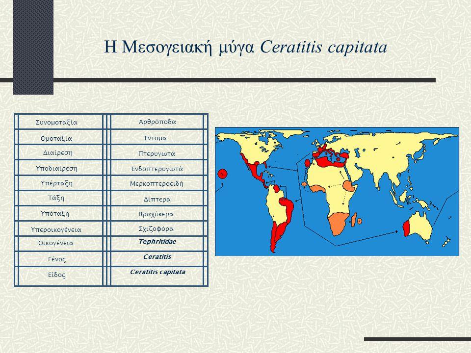 Η Μεσογειακή μύγα Ceratitis capitata