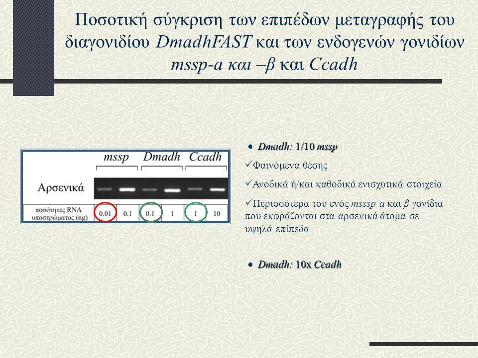 Ποσοτική σύγκριση των επιπέδων μεταγραφής του διαγονιδίου DmadhFAST και των ενδογενών γονιδίων mssp-a και –β και Ccadh