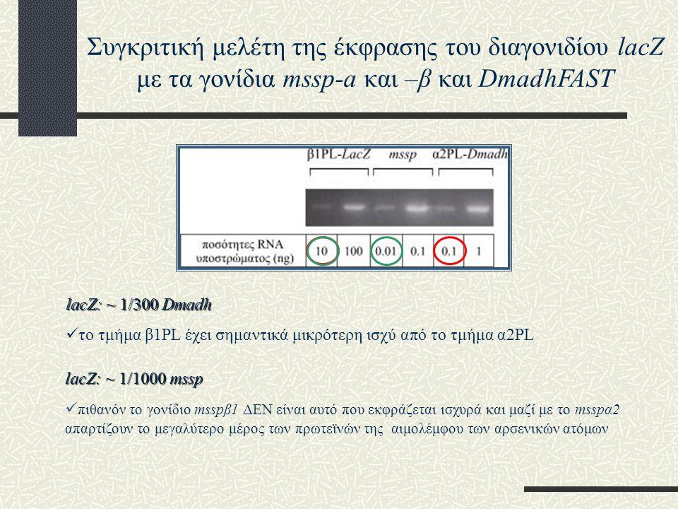 Συγκριτική μελέτη της έκφρασης του διαγονιδίου lacZ με τα γονίδια mssp-a και –β και DmadhFAST
