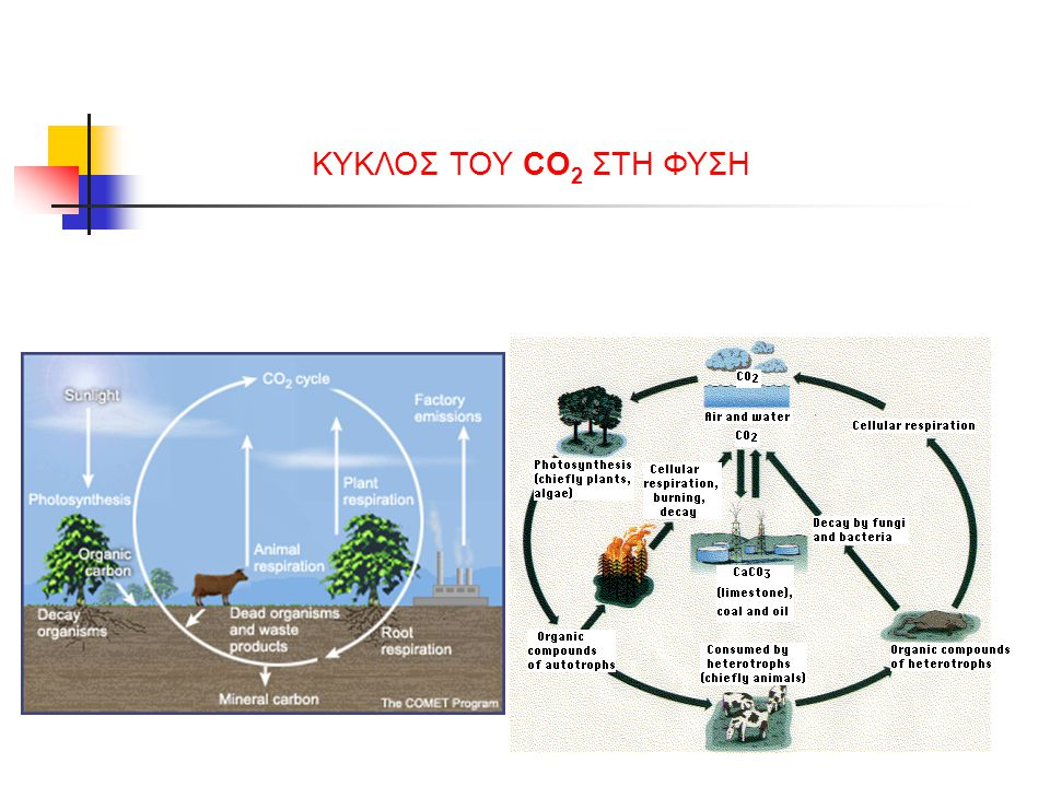 ΚΥΚΛΟΣ ΤΟΥ CO2 ΣΤΗ ΦΥΣΗ