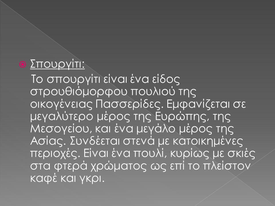 Σπουργίτι: