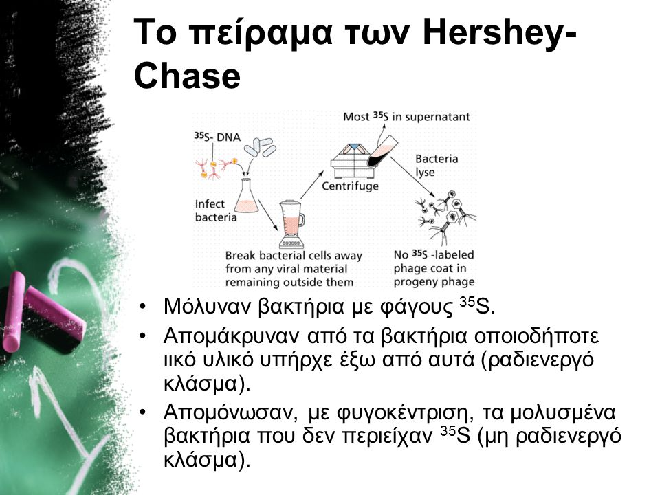 Το πείραμα των Hershey-Chase