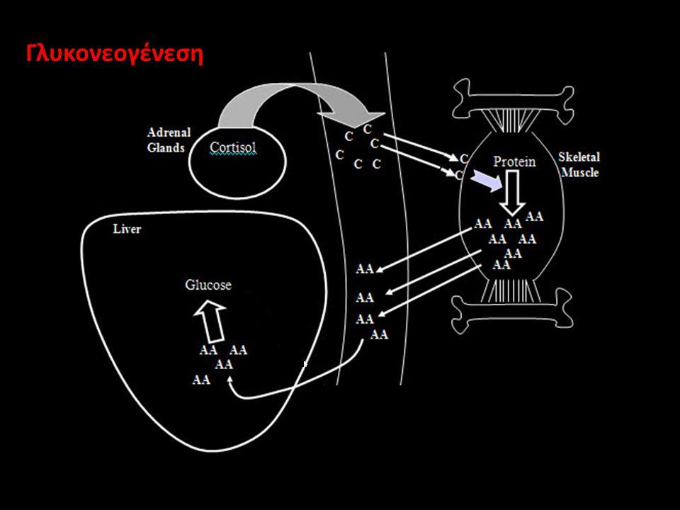 Γλυκονεογένεση