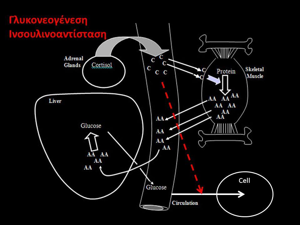 Γλυκονεογένεση Ινσουλινοαντίσταση Cell
