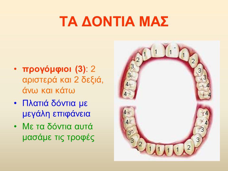 ΤΑ ΔΟΝΤΙΑ ΜΑΣ προγόμφιοι (3): 2 αριστερά και 2 δεξιά, άνω και κάτω