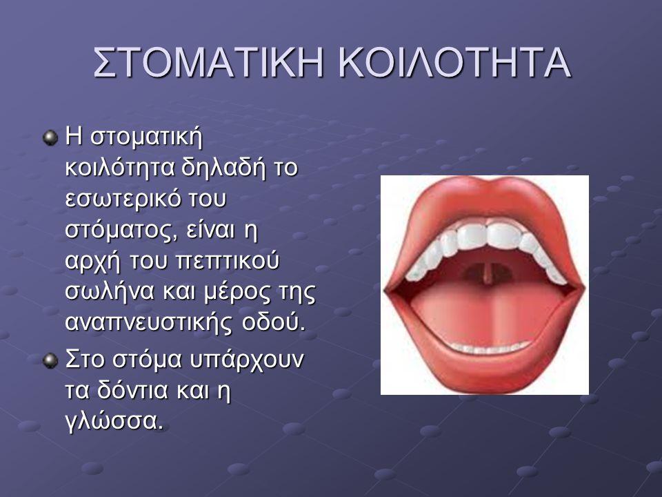 ΣΤΟΜΑΤΙΚΗ ΚΟΙΛΟΤΗΤΑ Η στοματική κοιλότητα δηλαδή το εσωτερικό του στόματος, είναι η αρχή του πεπτικού σωλήνα και μέρος της αναπνευστικής οδού.