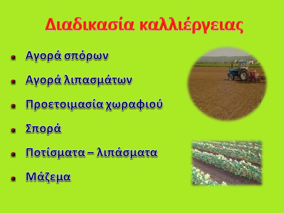 Διαδικασία καλλιέργειας